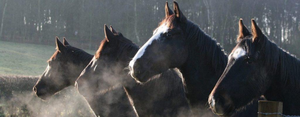 Lifetime Sanctuary Options horses