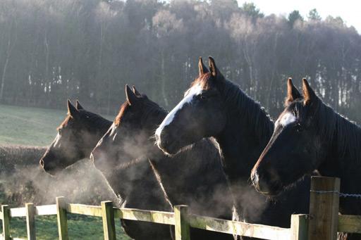 Horse Mist Horse Sanctuary logo for Stripe