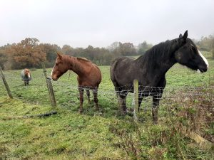 dina and maisie two of our sanctuary horses