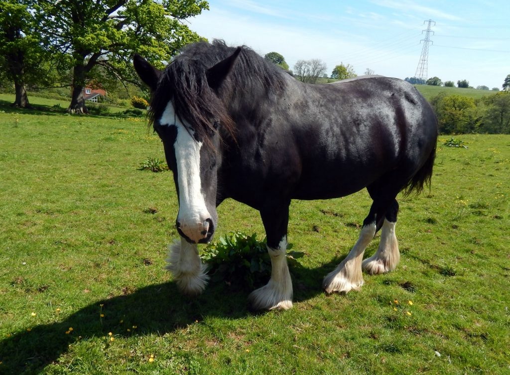 dina one of our resident horses at the sanctuary