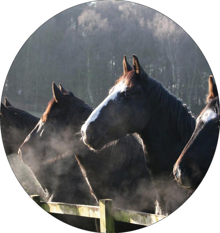 Horse Mist Horse Sanctuary