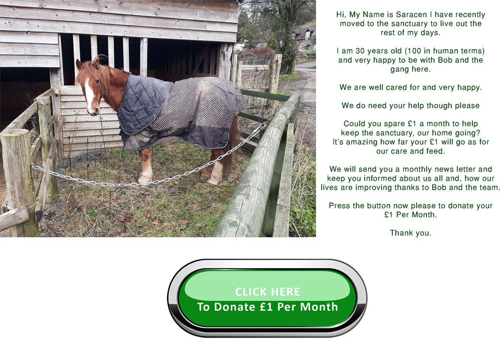 Saracen's appeal for £1 per month donation
