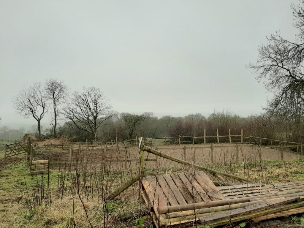 Mizzly and Misty at the Sanctuary Today