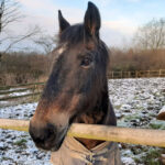 Wizz has found his new home at the sanctuary