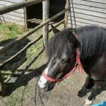 Our wonderful sanctuary horses Angel