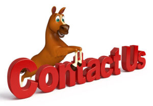 Easily contact us image with horse