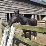 Our wonderful sanctuary horses Harry